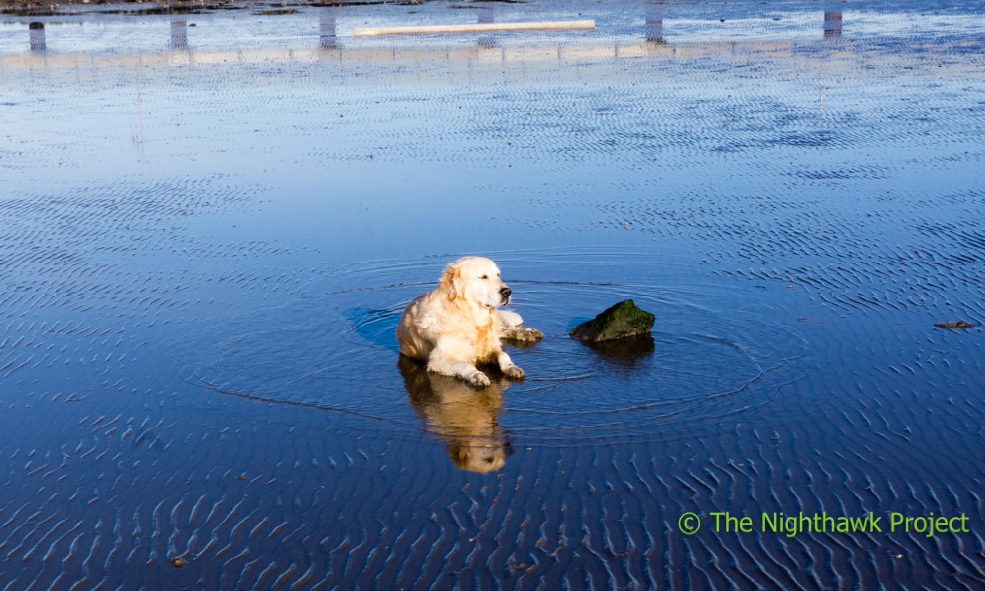 Stories from Life in the fast lane Retriever Style